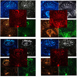Creative 4 en 1 étoiles de porc Sky Projectror lampe de bureau à la lumière de nuit