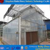 Niedrige Kosten-China-Fabrik-Wasserkultursystems-Plastiktomate-Gewächshaus