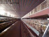 4 Schicht-Huhn-Rahmen mit guter Qualität