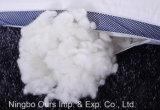 100%COTON Oreiller Santé Cassia rempli de sperme Factory Direct traiter