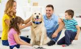 Drie Kleuren maken GPS GPS van het Huisdier van de Drijver van de Hond Slimme Kraag waterdicht