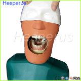 Modèle aîné de mannequins de qualité avec le torse il peut être fixe sur la présidence dentaire pour n'importe quelle pratique en matière de position