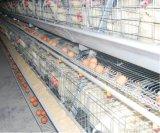 Système automatique de matériel de cage de poulet de Hybird de ferme avicole (un type bâti)