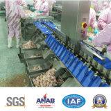 Trepang Chicken Abalone IP69 SUS 304 Máquina de classificação