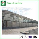 Serre chaude en verre galvanisée à chaud pour la plantation