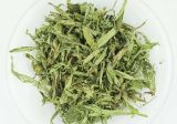 Stevia выходит здоровый чай