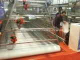 A China uma alta qualidade e tipo H sistema Granja de aves de gaiola de frangos de corte