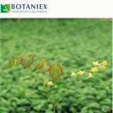 Naturepimedium-Pflanzenauszug-Puder