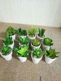 Plantes et fleurs artificielles de la centrale succulente Gu809204553