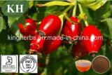 Naturel Extrait de Rose Hips / Rosa Mosqueta extrait de 5 % de la vitamine C, D'UV