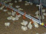 Sistema de desinfeção automático do pulverizador da casa da grelha/reprodutor/galinha da camada/pintainho