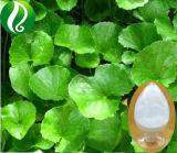 Grand stock de produits cosmétiques Madecassoside Grade 90 % bonne solution de l'eau