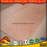 madera contrachapada del anuncio publicitario de la base del álamo/del eucalipto de la cara de Plb del rojo de 6m m