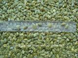 Горячая продажа блеск кожи семена тыквы доизмельчитель зерна нового урожая 2017