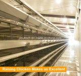 Большая емкость птицы фермы слой курицы клеток H Type отсека для жестких дисков