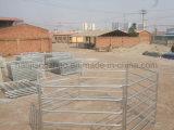 Comitati galvanizzati dell'iarda del bestiame di prezzi di fabbrica da vendere (XMR91)