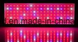 l'éclairage horticole de lampe d'usine de 400W DEL se développent