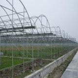 빠른 건축 좋은 품질 강철 구조물 온실