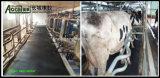 Циновка коровы, малая циновка Caw диаманта, циновка поголовья, животная циновка