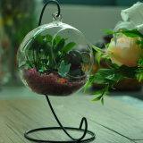 Porte-bougie Votive en verre résistant à la chaleur en vrac