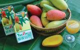 Het Sap van de mango