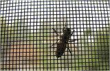 Pantalla 16x16 de la ventana del insecto de la fibra de vidrio