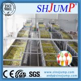 Cadena de producción del jugo de limón de la Lleno-Automatización/línea de transformación