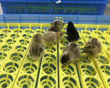 2018 Новая конструкция полностью автоматическая птицы инкубационных яиц инкубатор машины