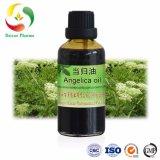 No CAS8015-66-5 Herbel organiques naturels traditionnels chinois Angelica l'huile de racine