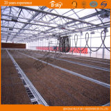 Bon Appearance Venlo Type Glass Multi-Span Greenhouse pour Planting Vegetables