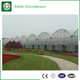 Serra idroponica di vetro del film di materia plastica della fabbrica della Cina per il pomodoro