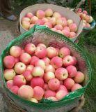 Hohe Guality Gala Apple nach Bangladesh 150-198