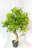 تصدير [فكتوري بريس] مصغّرة [بونسي] أشجار