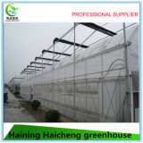 Multi Span Tunnel Green House for Flowers Growing