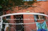 Sailinのバスケットのケージのための熱い浸された金網