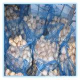 Taille mixte de l'exportation standard blanc normal frais Légumes à l'ail