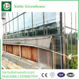 Serre van de Tuin van het Polycarbonaat van de Muur van het aluminium de Tweeling