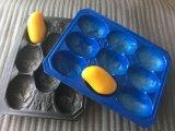[39إكس59كم] [بّ] [فرويت ند فجتبل] مادّيّة يعبّئ صينية بلاستيكيّة مع فتحة بئر
