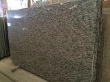 최신 판매 중국 Polished 바다 꽃 벽 도와 화강암