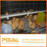 Kuikens van de Laag van de dag gebruikten de Oude/Grill het Automatische Systeem van de Kooi van de Kip voor Jonge kip