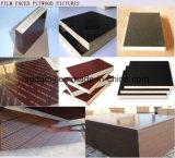 Madera contrachapada de la fabricación de la madera contrachapada del encofrado con el mejor precio