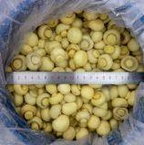 Agaricus bisporus congelé par IQF/champignon de couche congelé