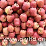 Fresco de alta calidad Huaniu Apple, Apple, Apple Qinguan FUJI