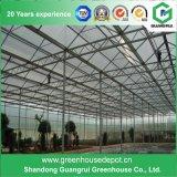 Invernadero espeso superior de la PC de la hoja del policarbonato de China para el uso agrícola/comercial
