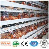 Новая горячая окунутая гальванизированная клетка цыпленка слоя для фермы поголовья (типа рамка)