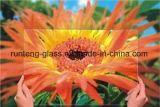 3mm AG Glas het Van uitstekende kwaliteit, Anti-Glare Glasfabriek