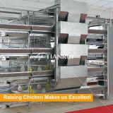 H печатает курочку на машинке батареи поднимая клетку цыпленка для цыпленоков младенца дня старых
