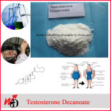USP of hormones Steroid GMP Powder Testosterone Decanoate Raw material