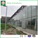 폴리탄산염 온실 PC 장 온실 플라스틱 온실 유리 온실