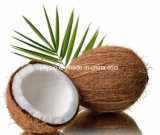4:1 ~20 de poudre d'extrait de noix de coco d'acide caproïque de qualité : 1